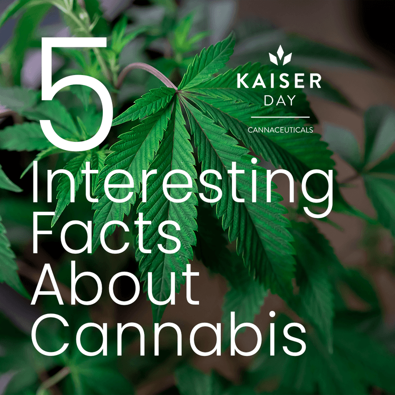 5 Interesting Facts About Medical CannabisKaiser Day Cannaceuticals